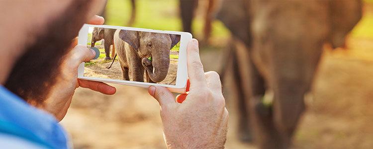 iphone-photos-transfer